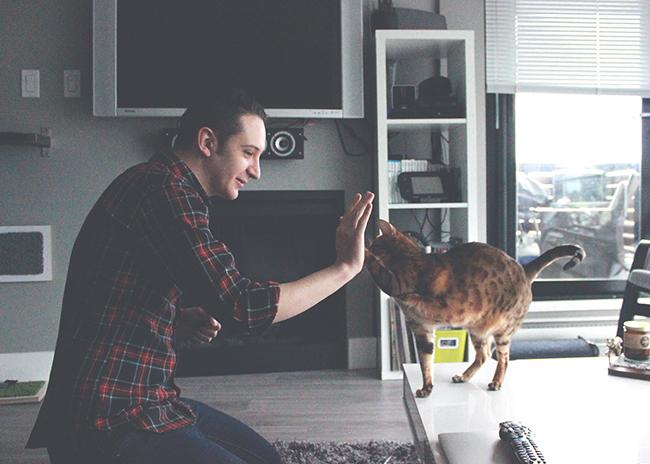 cat high five bro